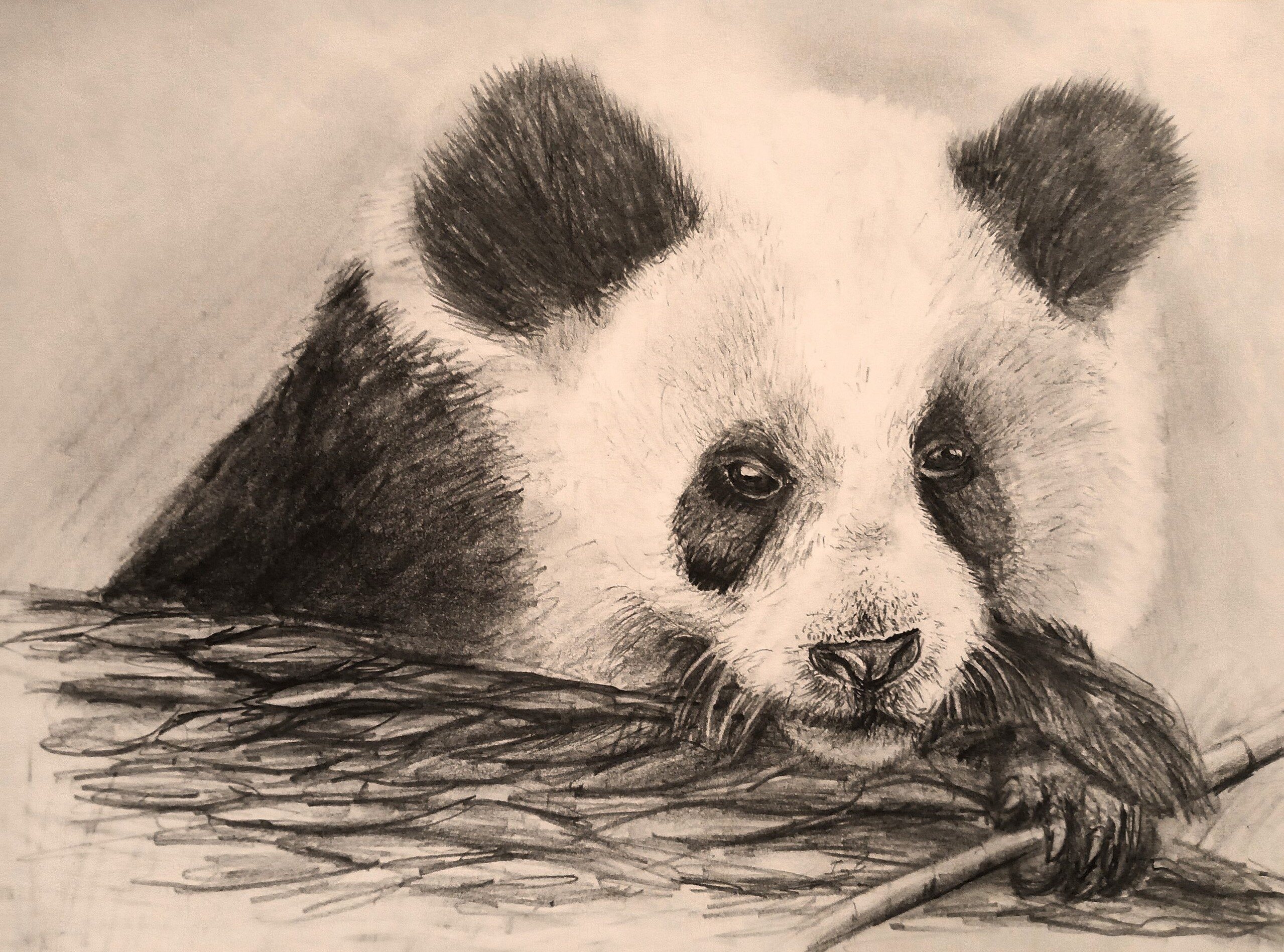 Antoni Pęgier, 11 lat, Panda, Szkoła Podstawowa nr 69