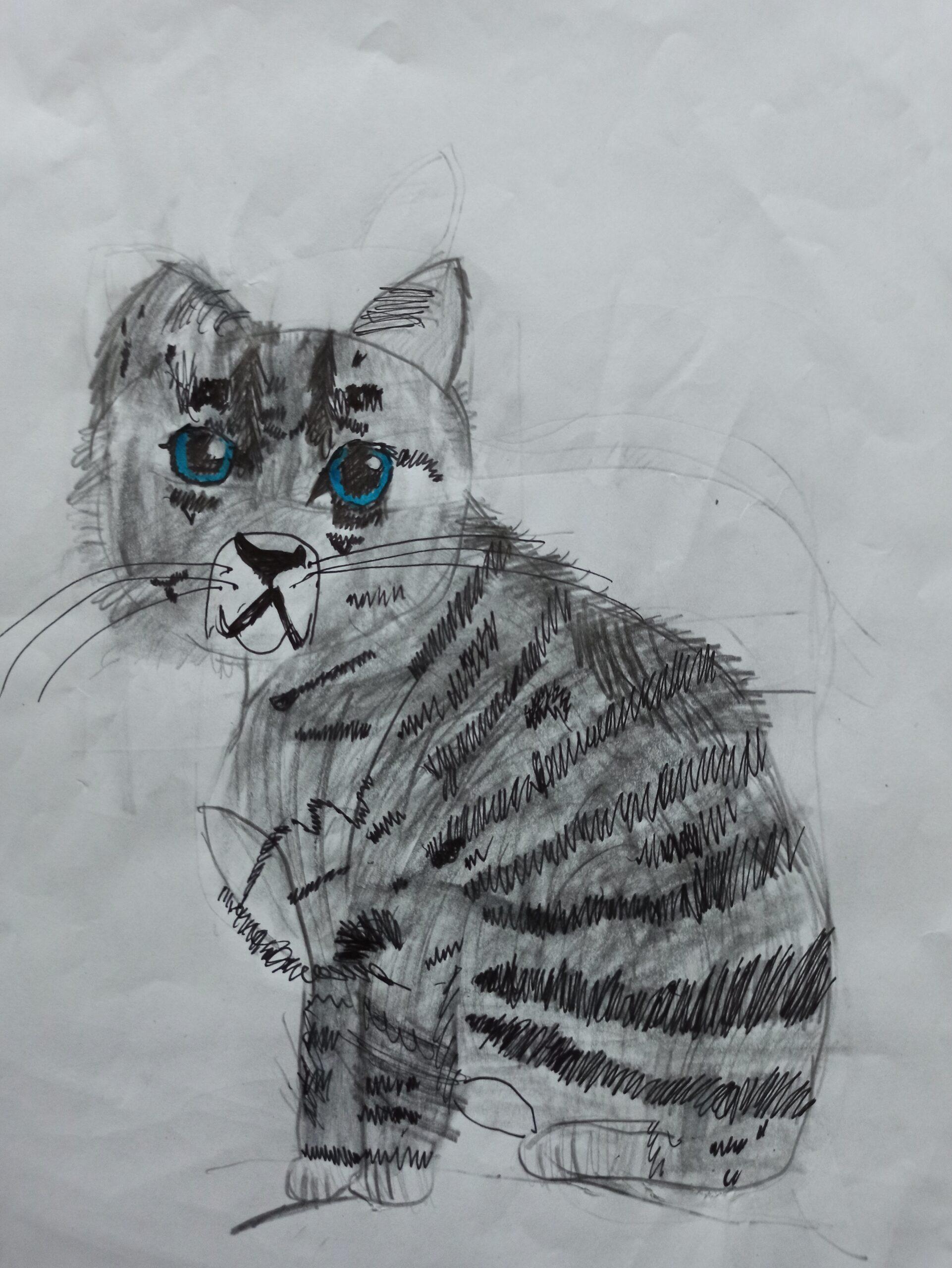 Lena Sabała, 8 lat, Szkoła Podstawowa nr 375, Kot